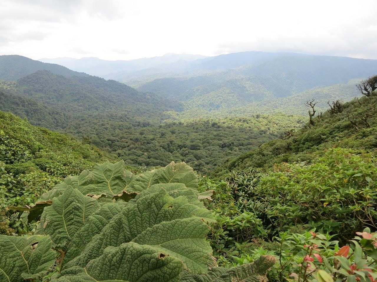 Ein Urwald aus der Vogelperspektive